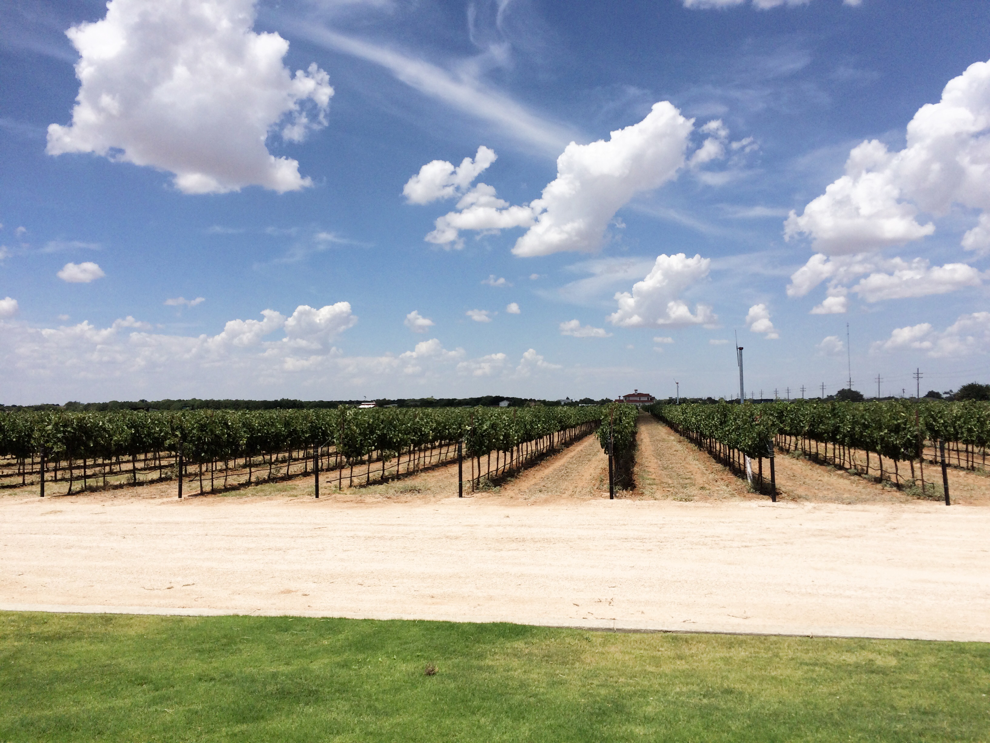 Texas Peanut Tour winery