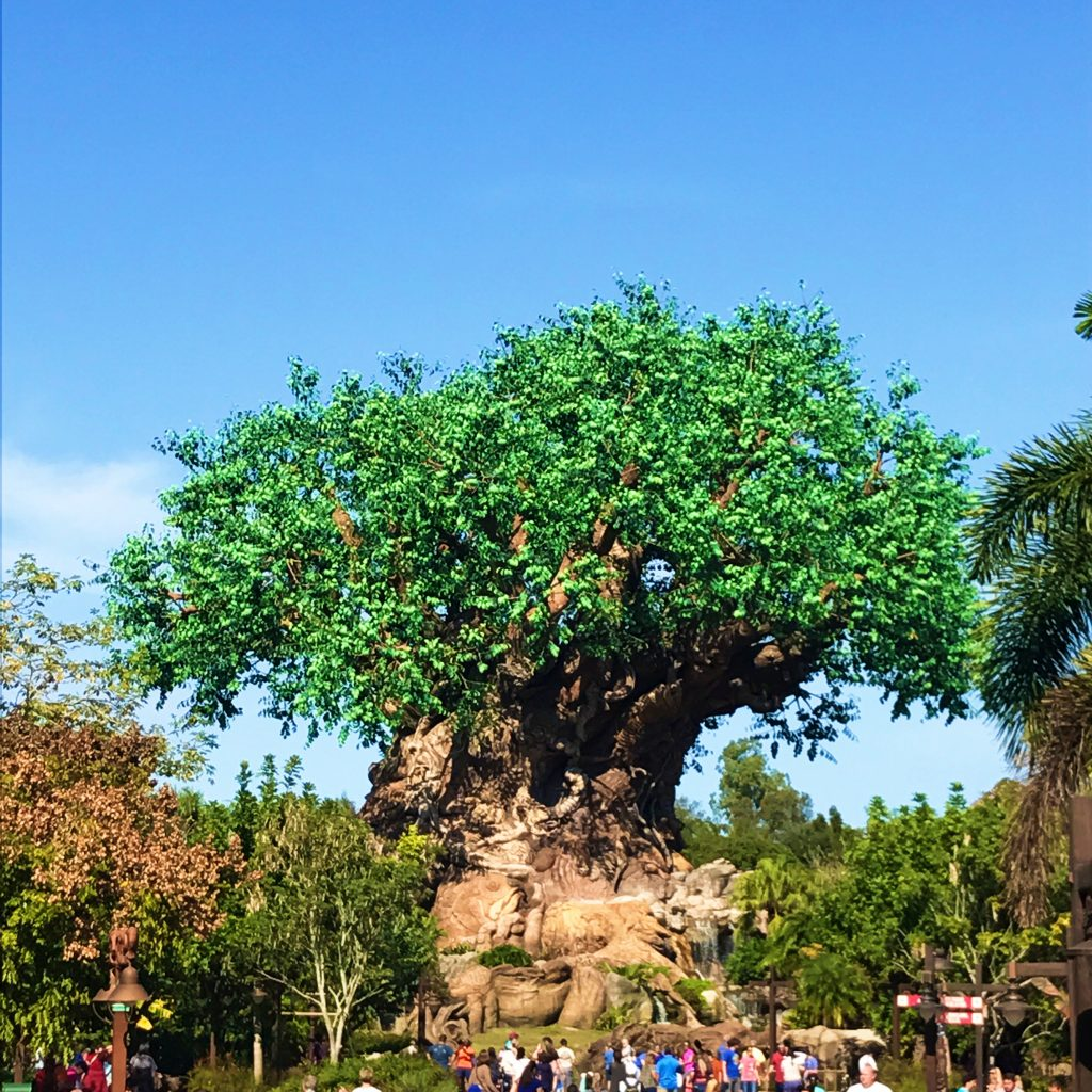 disney-world-animal-kingdom-tree-of-life