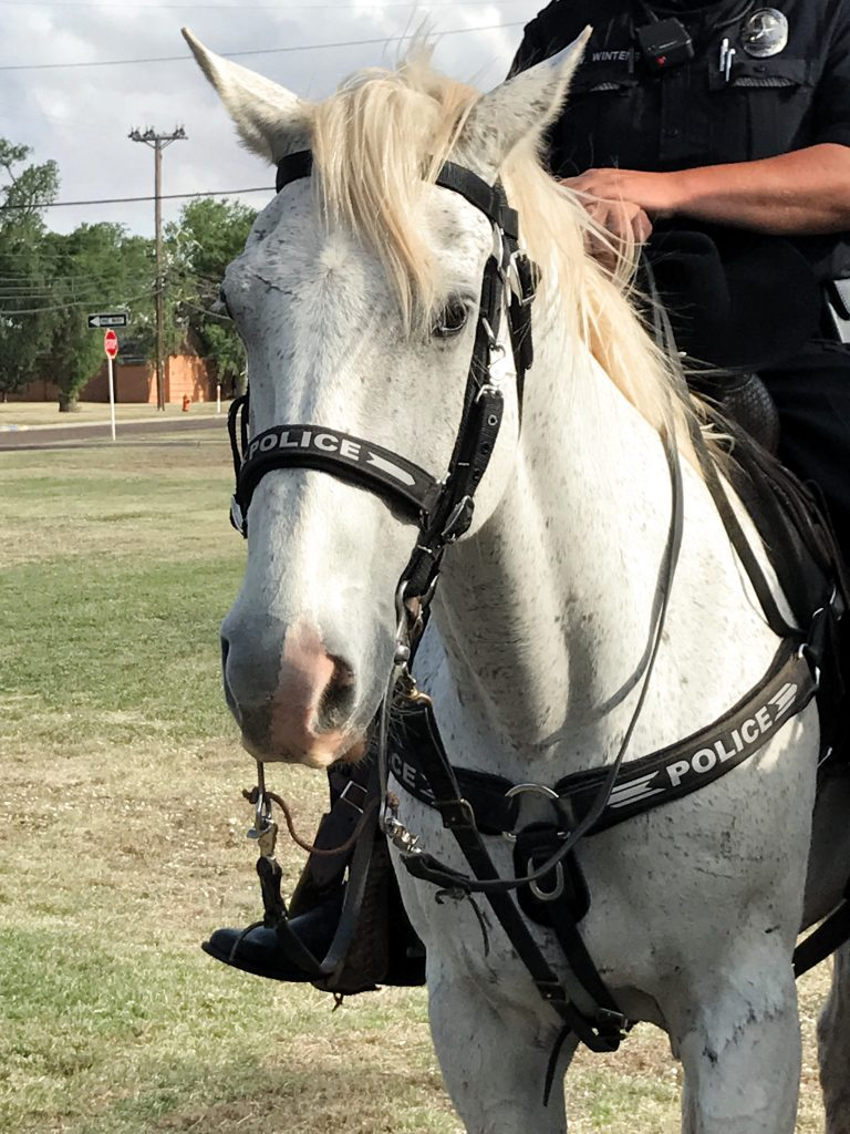 Lubbock Law Enforcement Citizens Academy Mounted Police